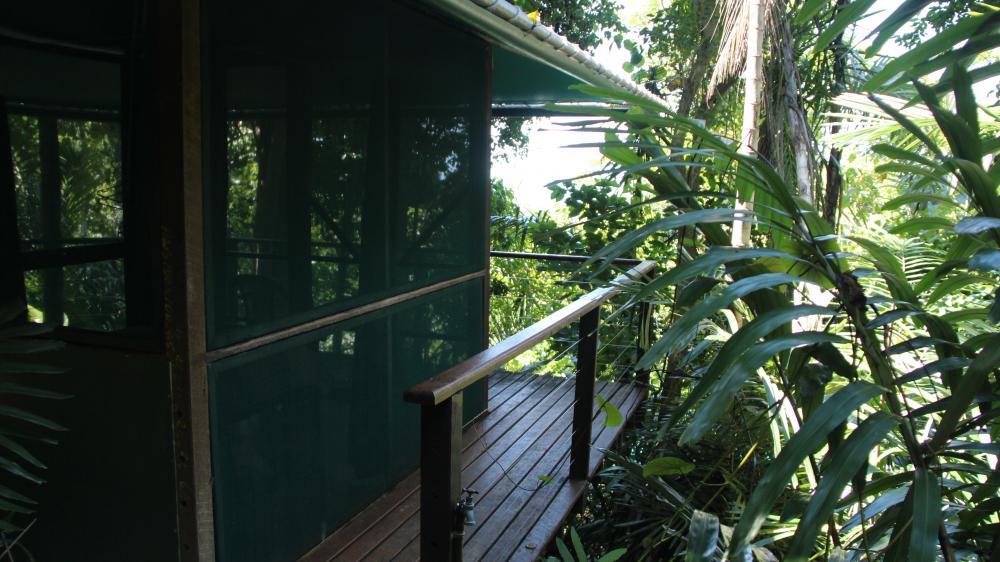 Sanctuary rainforest hut exterior view pretty hut with rainforest surrounding it.